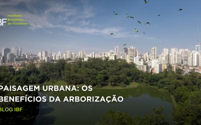 Paisagem Urbana: os benefícios da arborização