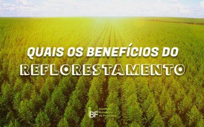 Quais os benefícios do reflorestamento?
