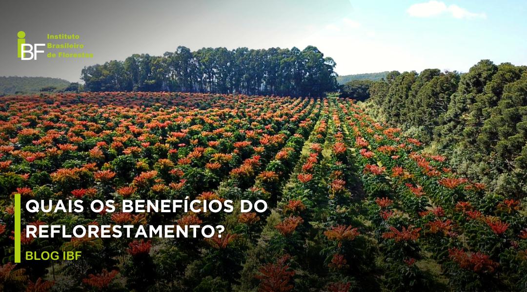 benefícios do reflorestamento