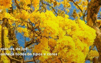 Espécies de Ipê: conheça todos os tipos e cores