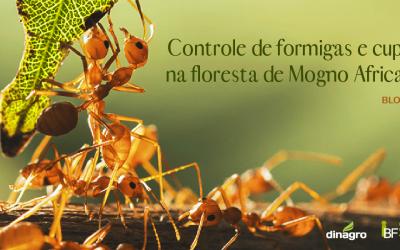 Controle de formigas e cupins no mogno africano