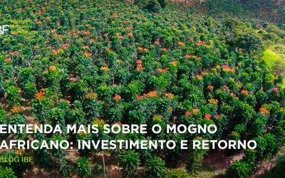 Entenda mais sobre o Mogno Africano: Investimento e Retorno