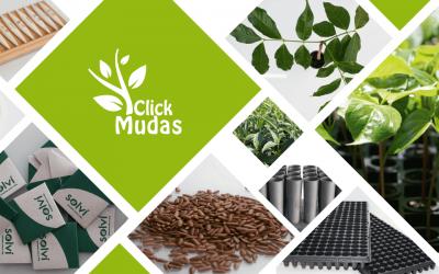 Click Mudas – Loja Virtual do Instituto Brasileiro de Florestas