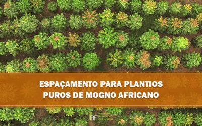 Espaçamento utilizado no cultivo do Mogno-Africano