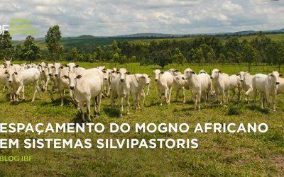 Espaçamento do mogno-africano em sistemas silvipastoris