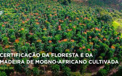Certificação da floresta e da madeira de mogno-africano cultivada