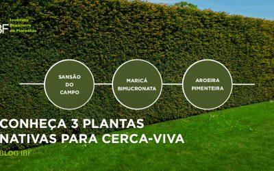 Conheça 3 plantas nativas para Cerca-Viva