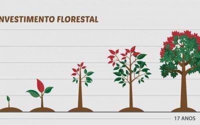 Floresta de Mogno Africano: investimento rentável e inteligente