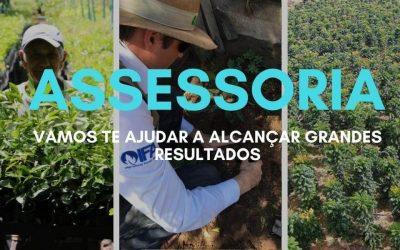 Conheça o plantio de Mogno Africano no estado do Maranhão
