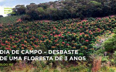 Dia de Campo – Desbaste de uma floresta de 3 anos