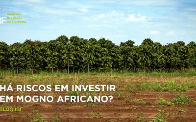 Há riscos em investir em Mogno Africano?