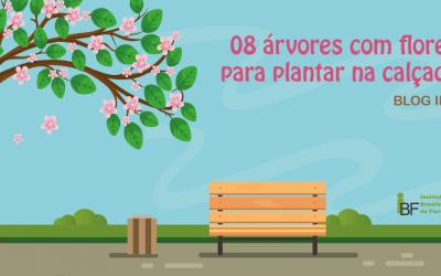 8 árvores com flores para plantar na calçada