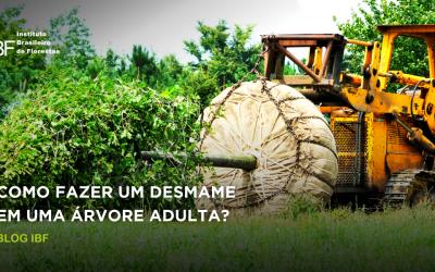 Como fazer um desmame de árvore adulta?