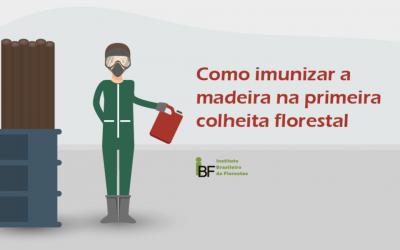 Como imunizar a madeira na primeira colheita florestal