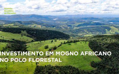 Investimento em Mogno Africano no Polo Florestal