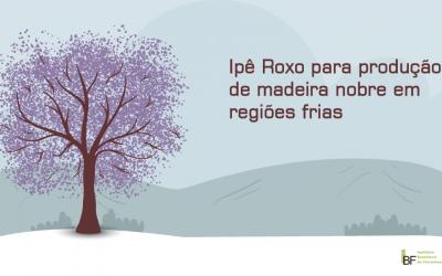 Ipê Roxo para produção de madeira nobre em regiões frias