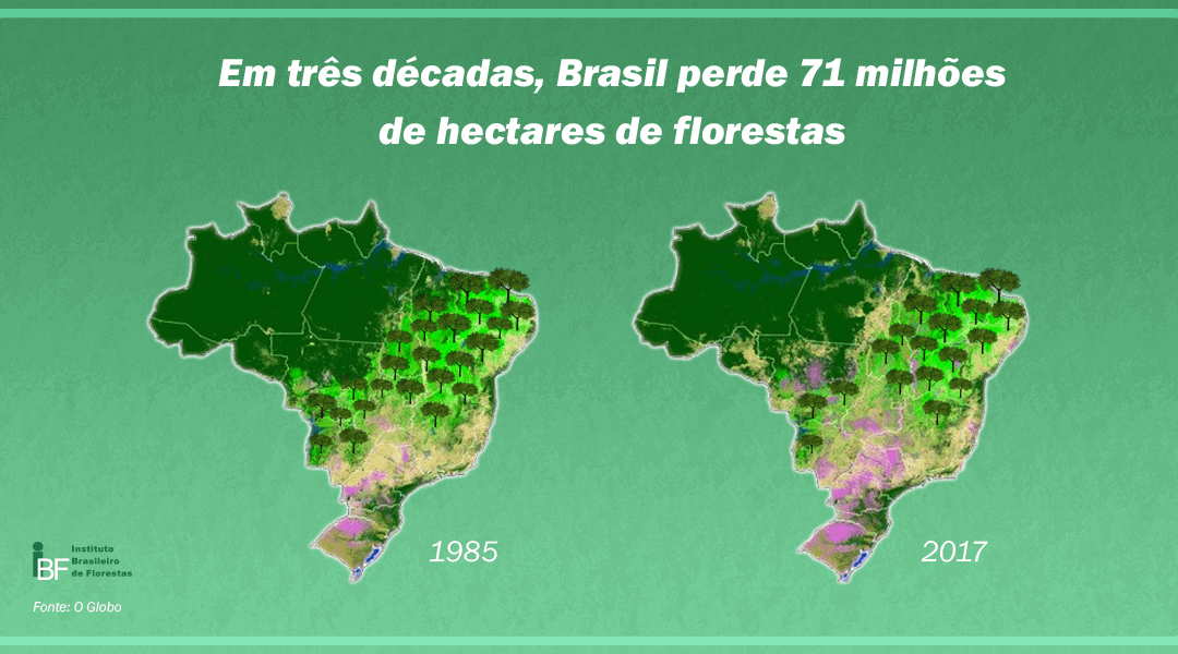 Em três décadas, Brasil perde 71 milhões de hectares de florestas