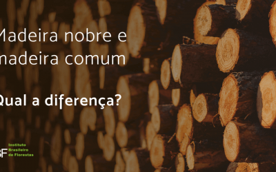 Madeira nobre e madeira comum, qual a diferença?