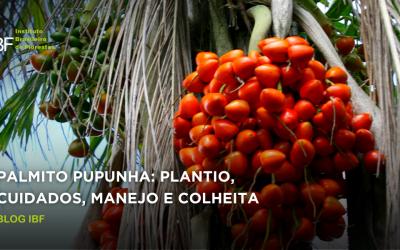 Palmito pupunha: plantio, cuidados, manejo e colheita