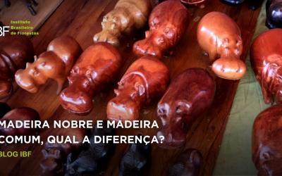 Tipos de madeira: diferenças entre a madeira nobre e a madeira comum