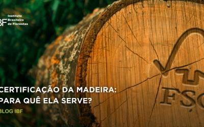Certificação florestal: qual é a sua função e por que eu preciso dela?