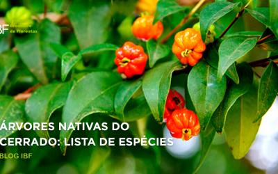 Árvores nativas do cerrado: lista completa de espécies!