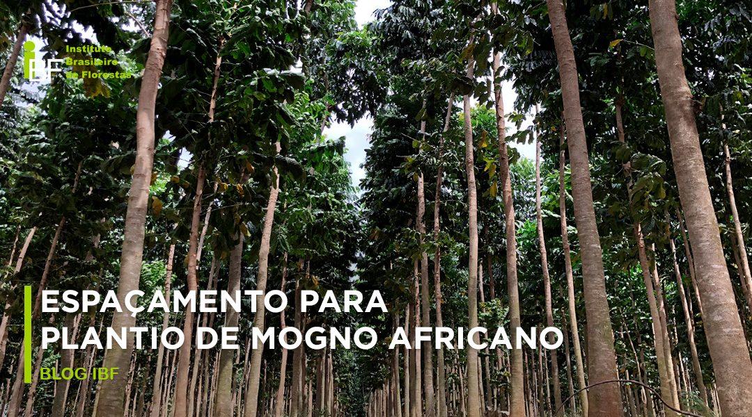 Espaçamento para plantios de mogno africano