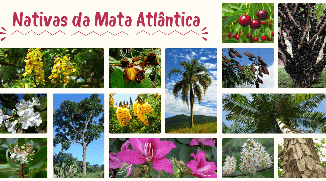 Árvores nativas da Mata Atlântica lista completa de espécies
