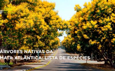 Árvores nativas da Mata Atlântica: veja lista completa de espécies!
