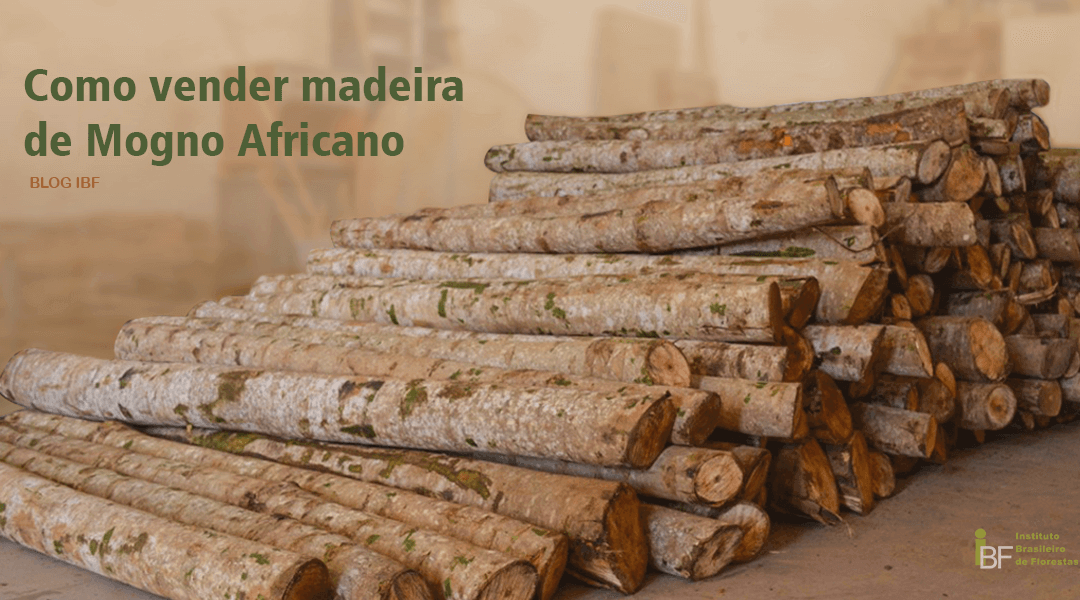 Como Vender Madeira De Mogno Africano