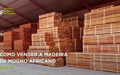Tudo sobre como vender madeira de Mogno Africano