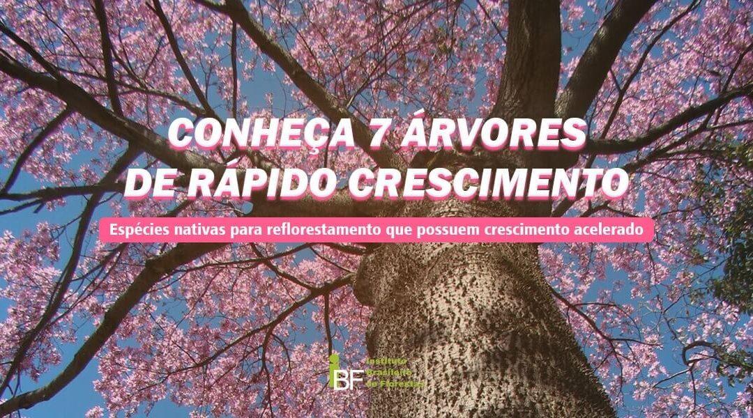 Conheça 7 árvores de rápido crescimento