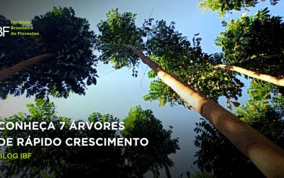 Conheça as 7 melhores árvores que crescem rápido