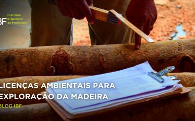 Entenda as licenças ambientais para exploração da madeira