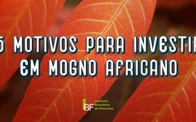 5 Motivos para investir em Mogno Africano