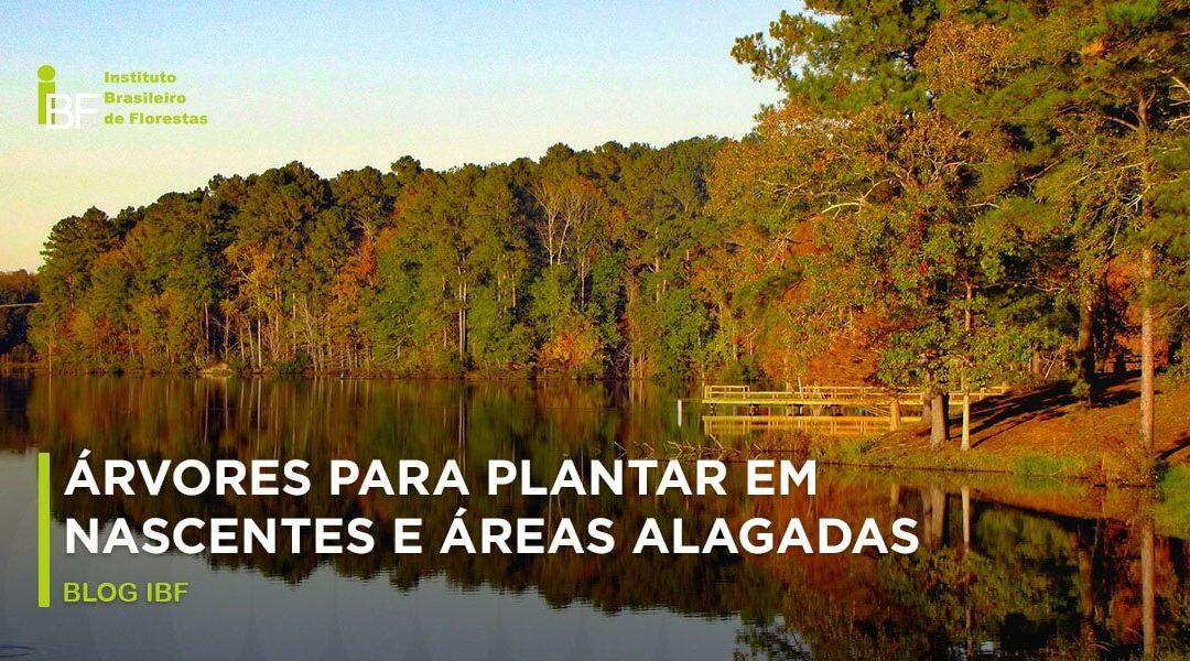 Árvores para plantar em nascentes e áreas alagadas