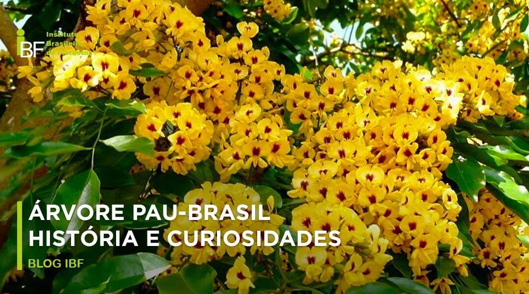 Árvore Pau-Brasil História E Curiosidades