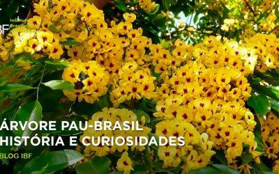 Árvore Pau-Brasil: História e curiosidades