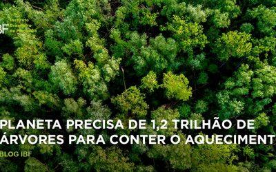 Para conter aquecimento 1,2 trilhão de árvores precisam ser plantadas