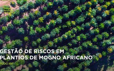Gestão de riscos em plantios de mogno africano