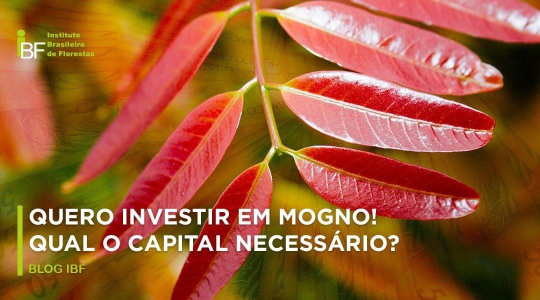 Qual capital necessário para investir em Mogno Africano