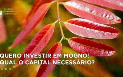 Qual capital necessário para investir em Mogno Africano?