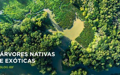Árvores nativas e exóticas