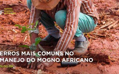 Erros mais comuns no manejo do mogno africano