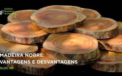 Madeira nobre: todas as vantagens e desvantagens!
