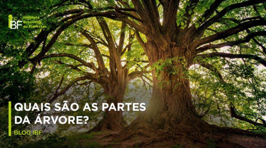 Quais São As Partes Da Árvore
