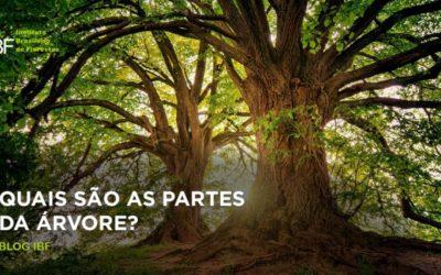 Quais são as partes da árvore?