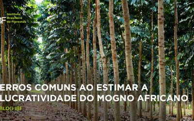 Erros comuns ao estimar a lucratividade do mogno africano