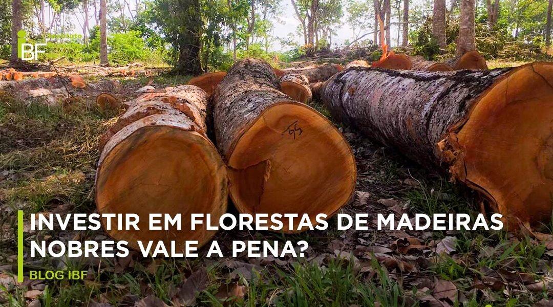 Investir Em Florestas De Madeiras Nobres Vale A Pena