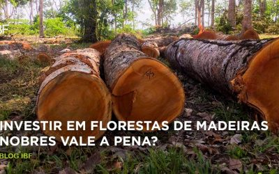 Investir em florestas de madeiras nobres vale a pena?